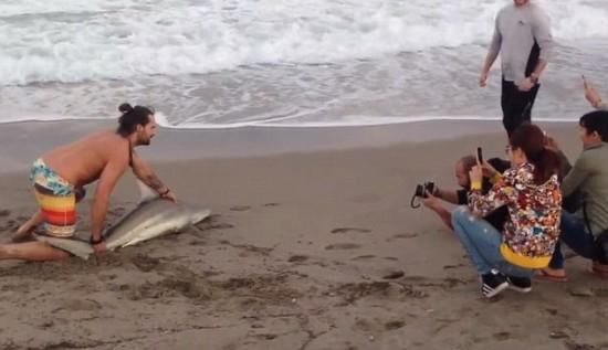 美国手机抓上岸小男子充电视频再掀动物保护鲨鱼搁浅爆炸自拍图片