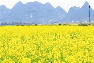 宜州市积极调整农业产业结构