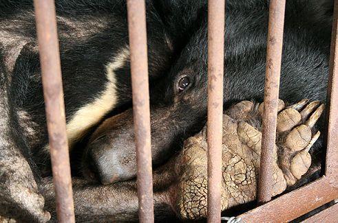 农家乐老板卖野生动物被诉 货源来自两广地区