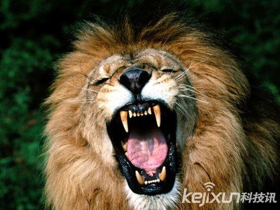 世界十大致命动物:居然它是冠军