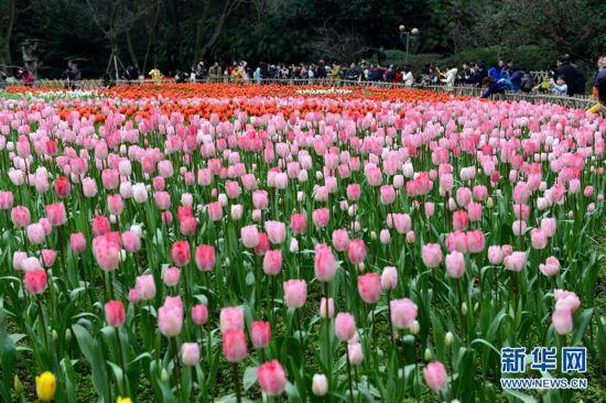 #(晚報)(1)重慶:春暖花開醉游人