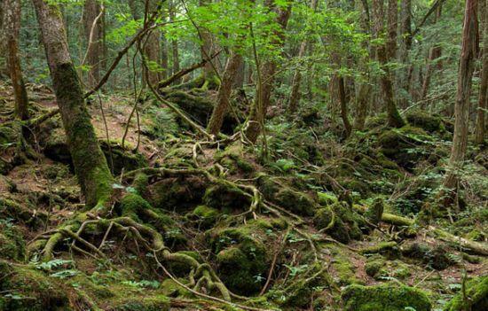 2016香港挂牌完整篇探秘日本富士山下自杀森林 每年移出上百具尸体(高清组图)--贵州频道2016年香港6閤總綵图库