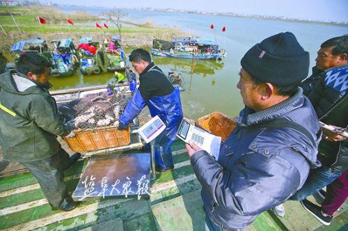 又到捕捞时节 盐城射阳弓箭湖渔场热闹非凡
