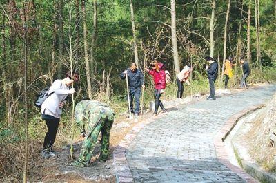 南平松溪直机关 武警 志愿者参加义务植树活动图片