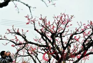 三月桃花最迷人眼