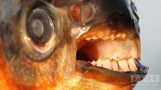 亚马逊河中最可怕的动物:最后一个太吓人了