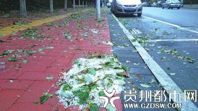人行道上树叶和冰雹散落.