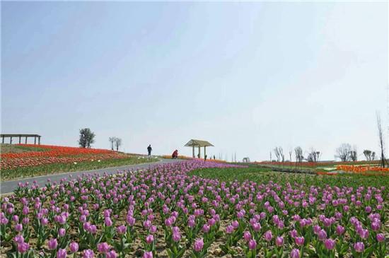 四川频道 新闻中心 市州新闻       成都市—三圣花乡(五朵金花)—