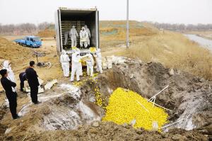 天津销毁进口水果 揭国产水国和进口水果有啥区别