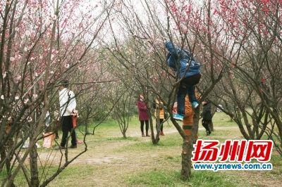 小孩爬上树