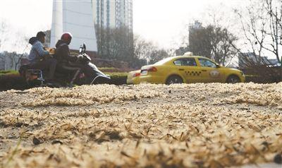 """南京又见""""梧桐雨"""" 马路似乎盖上厚棉被"""