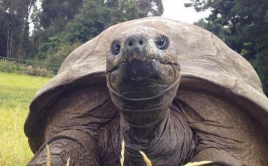 184岁高龄乌龟出生后第一次洗澡