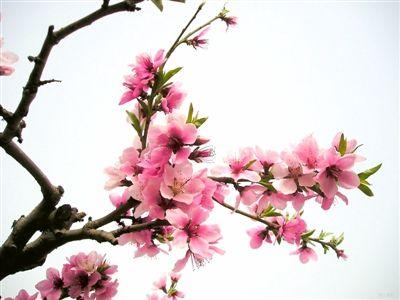 青海春季这些花你都认识吗