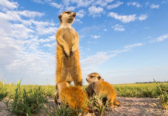 英国摄影师历时10年拍野生动物搞怪样