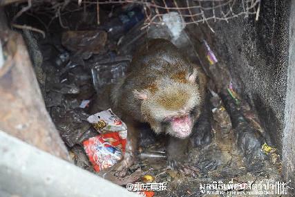 泰国一猴子被关洞中25年 主人想起来才丢点食物