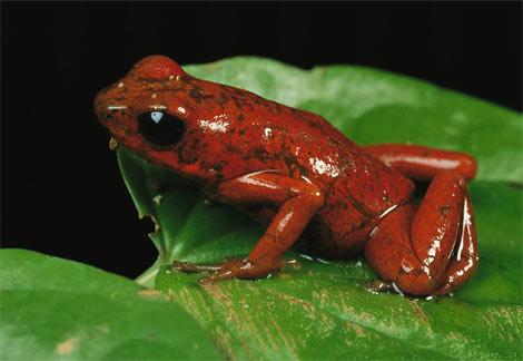 箭毒蛙活体被截获 被截获的箭毒蛙活体怎么处置