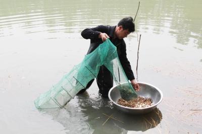 扬州饭店老板变养殖户今年本地虾产量或增加儿童诗情趣的有关生活图片