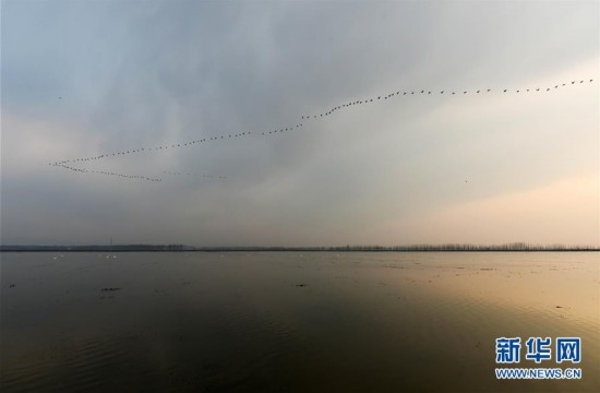 (春季美麗生態)(1)鳥鳴暖寒水 羽繪北國春
