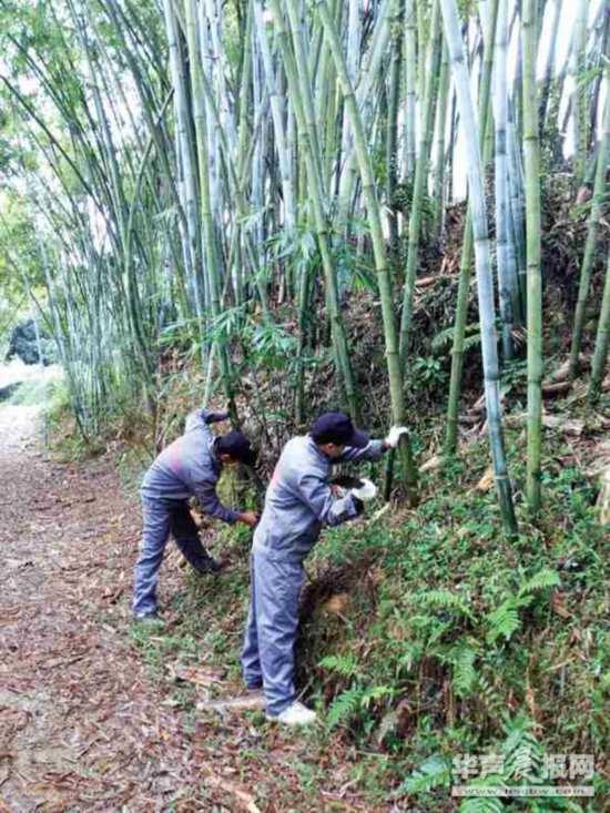 在外地创业的数千名马山县林圩镇村民返乡创业