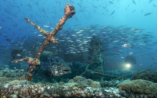 摄影师海底探秘大洋深处残骸 发现坦克飞机残骸(组图)