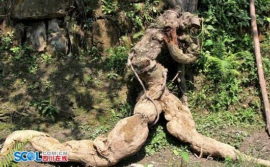 四川村民挖出人形