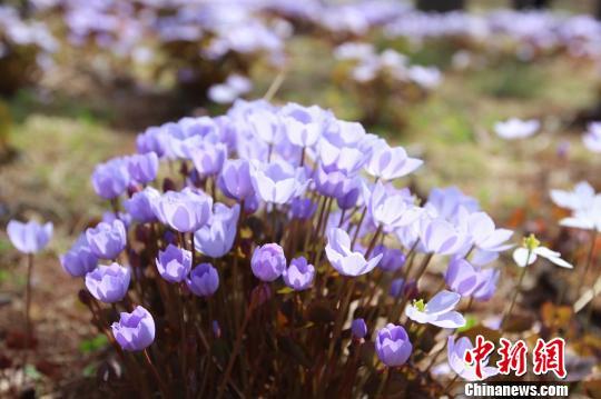 """中国最北森林植物园主打""""寒地植物""""开园迎客"""