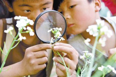 小学生在农场微小学观察植物花的校园2015结构济宁招生图片