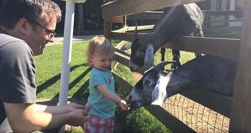 呆萌萝莉喂食山羊