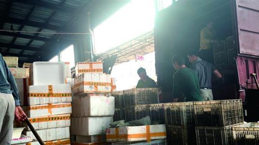 白沙洲市场内,工人将死虾搬上货车。