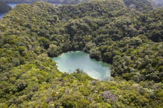 帕劳盐湖:800万水母锐减至60万只