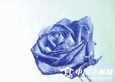 红色玫瑰花铅笔画-石信画的蓝玫瑰-亳州90后大学生用圆珠笔作画爆红 网友 当代马良