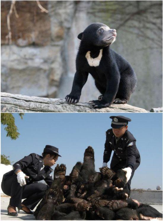 云南瑞丽特大走私野生动物案查获的78只熊掌。