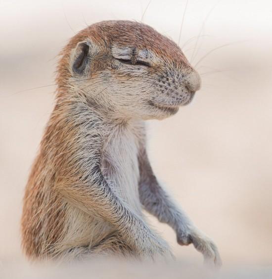 摄影师南非拍摄犯困松鼠驱赶苍蝇瞬间