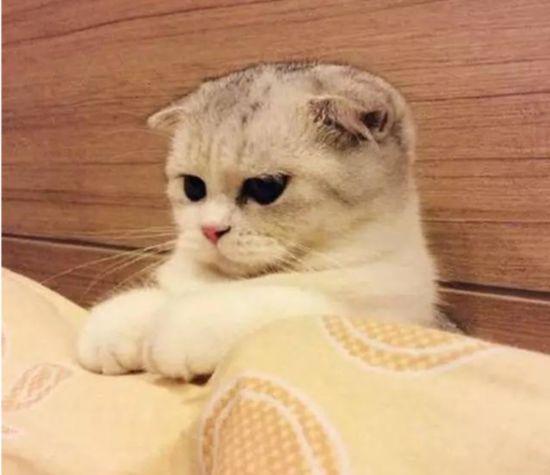 但有网友指出,baby养的是折耳猫,这种猫虽然非常可爱,却有先天基因