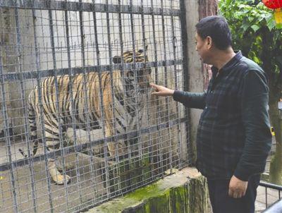 翠屏山动物园老虎太瘦 网友揪心:被人虐待?园方回应