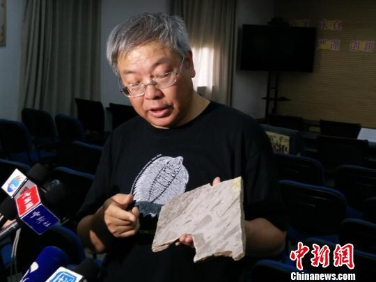 中国发现最古老大型多细胞生物化石群距今15.6亿年