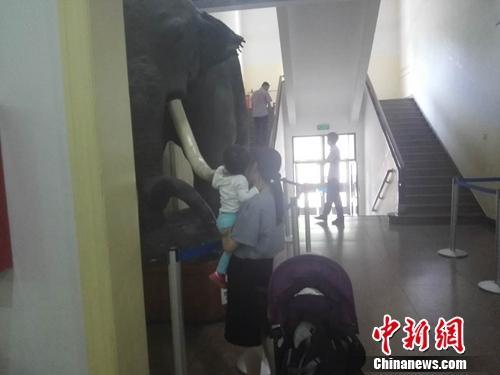 5月17日下午,一位母亲抱起孩子去触摸自然博物馆的大象模型