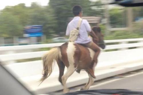 2016最牛座驾?泰国小男生骑马上学拉风炫酷(图)