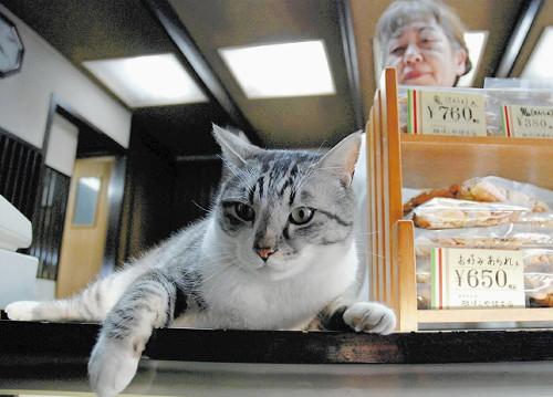 日本猫咪店长人气旺 卖萌揽客还能带来好运(图)