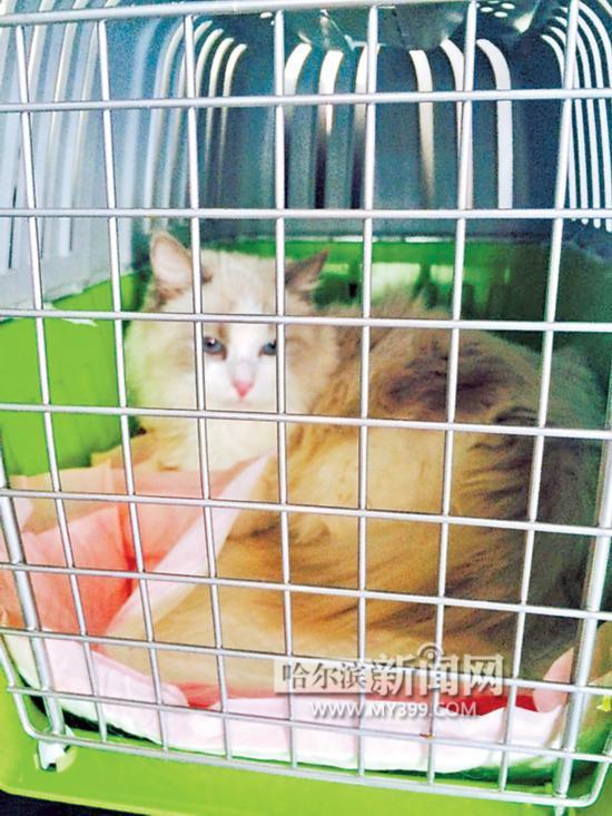 绿萝猫吃了有毒吗图片