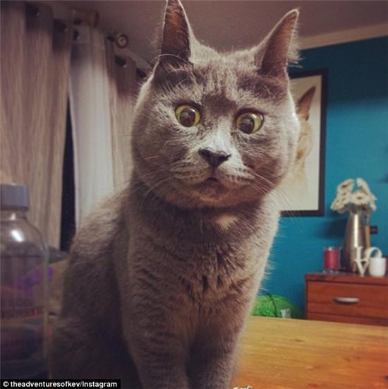 """小猫患脑积水反成网红 """"吃惊""""表情别具一格"""