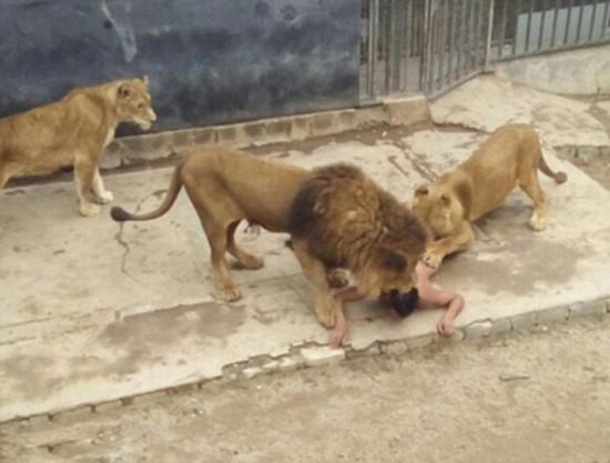 智利狮子全裸跳入狮笼自杀v狮子2男子被击毙自己的美女图片画图片