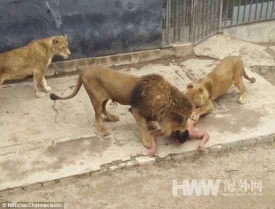 男子全裸跳进狮笼喂狮子 自称是先知