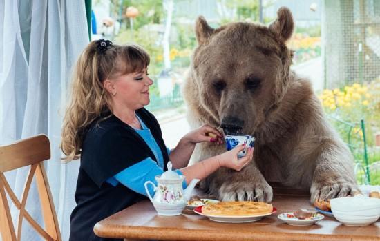 俄罗斯夫妇收养巨型棕熊当儿子养