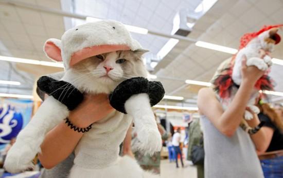 乌克兰举行猫咪秀 稀有喵盛装走秀