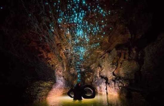 拍萤火虫洞穴奇观 宛若人间仙境 揭秘萤火虫为什么发光