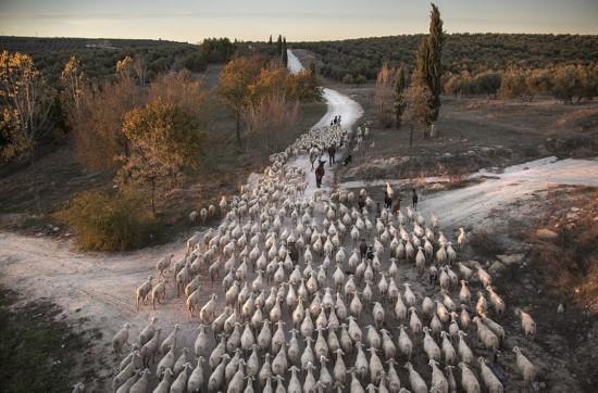 2016年度阿特金斯環境攝影大賽入圍作品出爐(高清組圖)