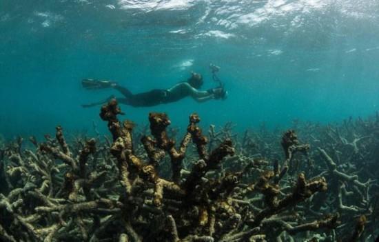 全球变暖致珊瑚礁漂白 - wuwei1101 - 西花社