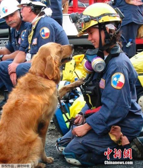 Bretagne是911当天第一批被派往现场执行搜救任务的300只搜救犬之一。15年前,纽约世贸中心双子塔遭遇恐怖袭击后倒塌,搜救犬Bretagne被紧急派往世贸中心残骸周围执行任务。整整两周时间,它每天艰苦工作12小时,协助消防员和警察搜寻营救幸存者。(资料图)
