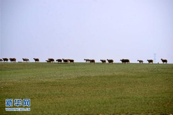 内蒙古乌拉特中旗草原夏季生态美